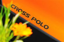CROSS POLO of The Early Summer