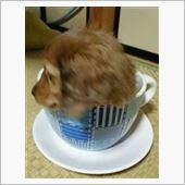 わんカップ♪