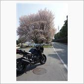 2015.3.30熊本県道145号線 桜見流し