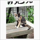 9月3日道の駅宇津ノ谷峠上り線岡部側にて。