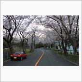 桜CARA2
