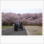 GSX-R 桜。