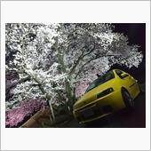 夜桜とプント(2016/04/17)