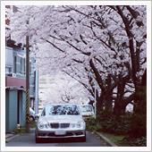 桜とAMG