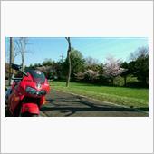 桜とVFR