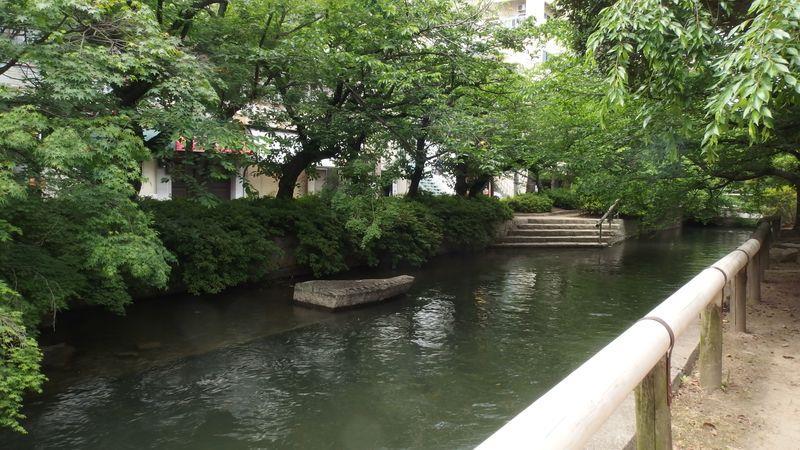 お昼は西川緑道沿いで<br /> 紅葉の木もあったので秋に来ればプチ紅葉を楽しめるかも