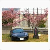 桜とテスラと