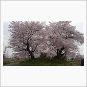 桜とビッグホーン