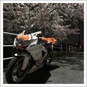 GSXRと夜桜
