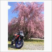 桜×Rs50  2017