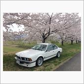 2017 桜