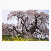 2017.4.20 桜と星空@福島3