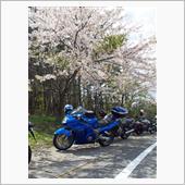 桜と愛車のコラボ