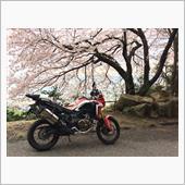 2017.4.9 桜を求めて・・・