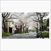 ヤマハと桜が美しい❗️