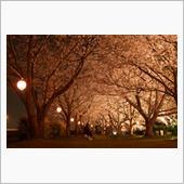 H30.4.1 桜撮影
