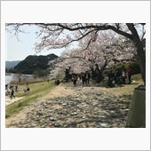3月31日錦帯橋