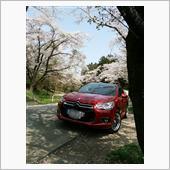 2018 城山湖の桜とDS
