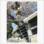Giulia & Cherry Blossoms