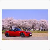 2018.3.31<br /> 春爛漫