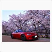 2018.4.1<br /> 早朝の桜並木