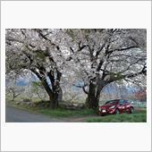 せっかく桜と撮ったのでw