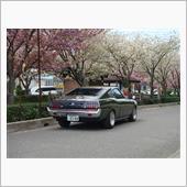 今年は早く桜の開花が来ました!