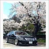 桜の花びらたち2018🌸