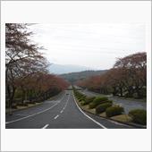 富士霊園で花見? 2018/4/14