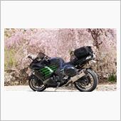 2018 バイクと桜