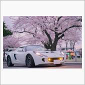 桜とエキシージ