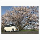 桜とパレダブ