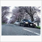 桜並木2018