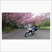 八重桜が綺麗でしたので、パチリ♪