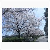 桜 PART5
