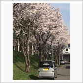 2018春 桜とNBOX
