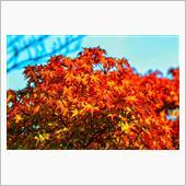 秋の気配を一眼撮影してきた🍁