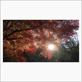 秋を感じますねぇヽ(*´▽)ノ♪
