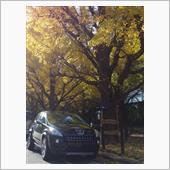 銀杏並木と3008