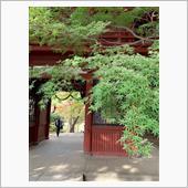 本土寺の紅葉2018🍁
