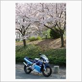200ガンマと桜。(2019年4月)