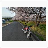 やっぱり、写真は桜と夕日かな。。。