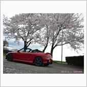 平成最後の桜とBEAT