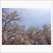 2019年sakura
