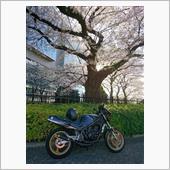 桜、終わりましたね(^^;)