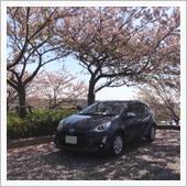 🌸 桜を堪能 ‼︎