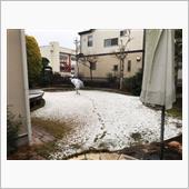 幸い?関東は大して降らずに済み、雪☃️は積もりません(直ぐに溶けました)でした、、😢。