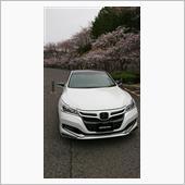桜とアコードハイブリッド🌸