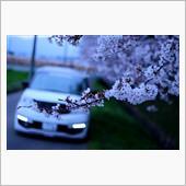 200328 今年の桜と愛車コラボ