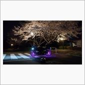夜桜とデイトナ